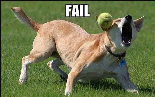 fail_dog.jpg